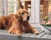 Sony přidává ostření na oči zvířat do bezzrcadlovky A6400