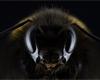 Vědci vyvinuli miniaturní polarizační kameru, s níž spatříte svět okem včely