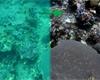 Nový algoritmus odstraní vodu z podvodních fotek. Ty pak vypadají naprosto neuvěřitelně