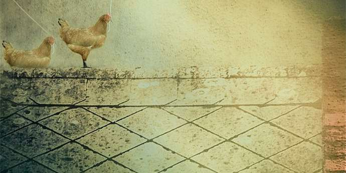 Malovani Do Fotografie Digiarena Cz